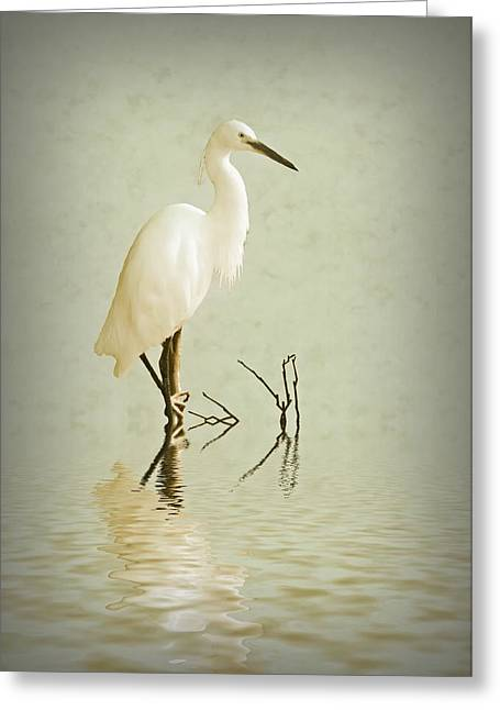 Heron.birds Greeting Cards - Little Egret Greeting Card by Sharon Lisa Clarke