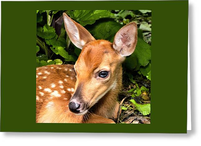 Little Fawn Greeting Card by Adam Olsen