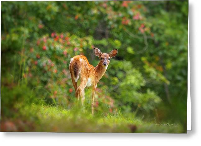 Little Fawn Greeting Card
