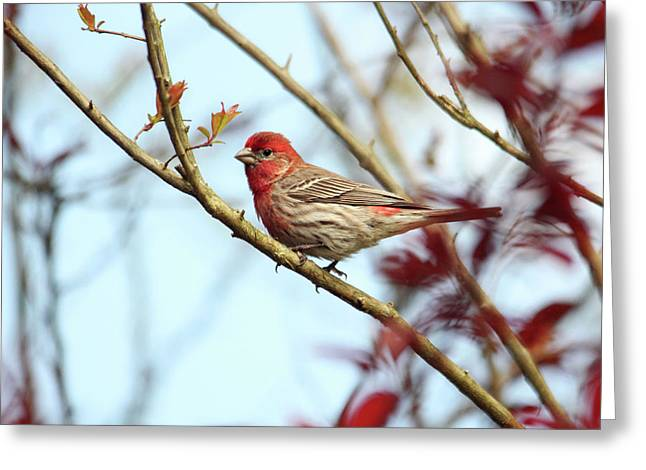 Little Finch Greeting Card