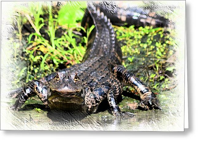 Little Gator 1 Greeting Card