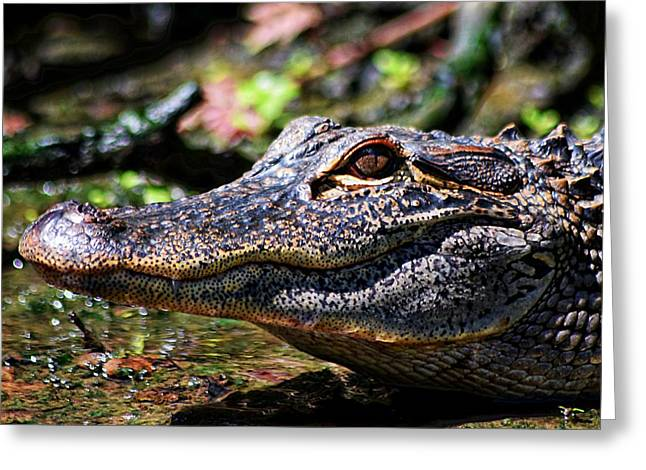 Little Gator Smile 1 Greeting Card