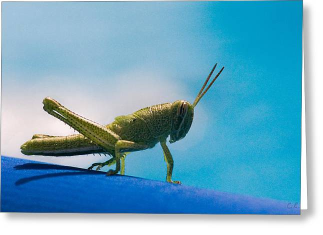 Little Grasshopper Greeting Card by Christopher Holmes