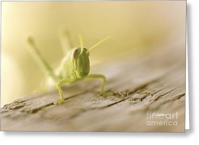 Little Grasshopper Greeting Card by Claudia Ellis