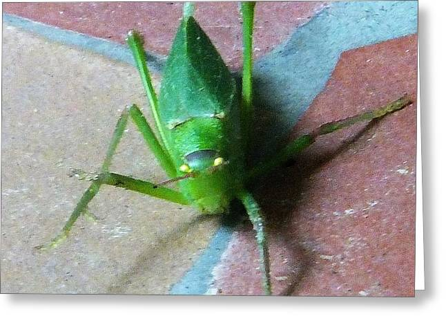 Greeting Card featuring the photograph Little Grasshopper by Denise Fulmer