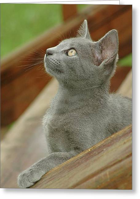 Little Gray Kitty Cat Greeting Card