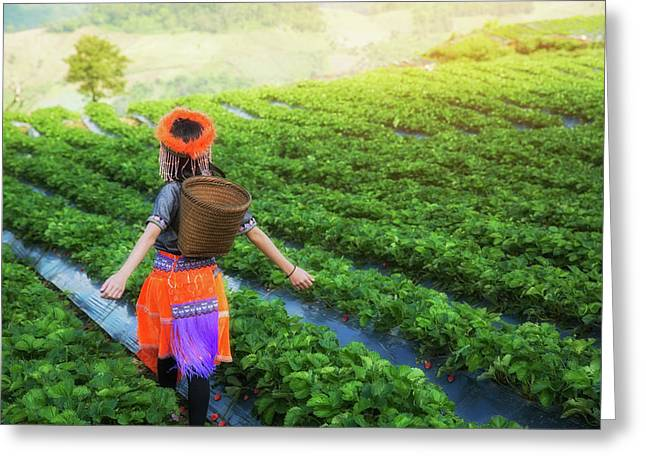 Little Hill Tribe Farmer Standing At Strawberry Field Farm Greeting Card by Anek Suwannaphoom