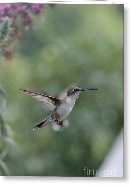 Greeting Card featuring the photograph Little Hummer by Laurinda Bowling