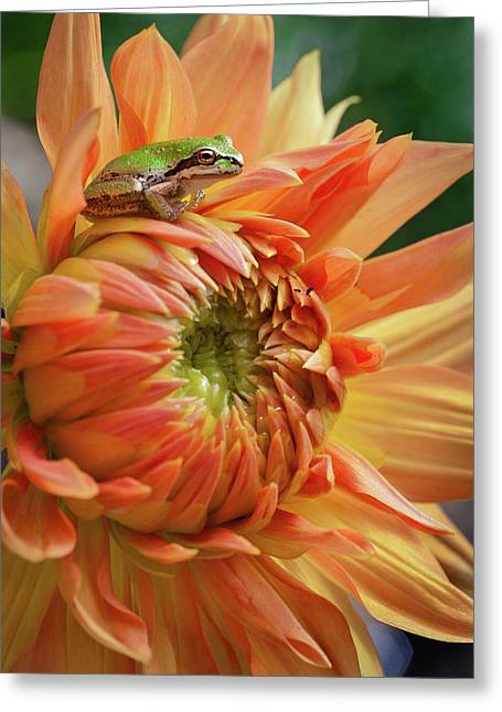 Little King Greeting Card by Marvin Mast