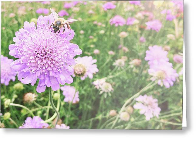 Greeting Card featuring the photograph Little Lady On Scabiosa by Cindy Garber Iverson