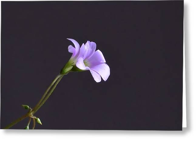Little Lavender Flowers Greeting Card