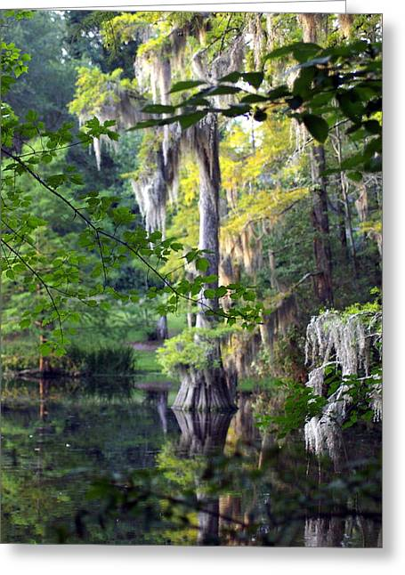 Little Moss Greeting Card by Don Prioleau
