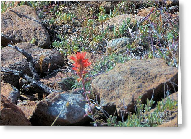 Little Orange Wild Flower Greeting Card by Debbie Wells