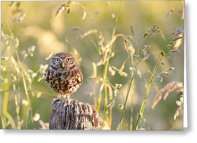 Little Owl Big World Greeting Card by Roeselien Raimond
