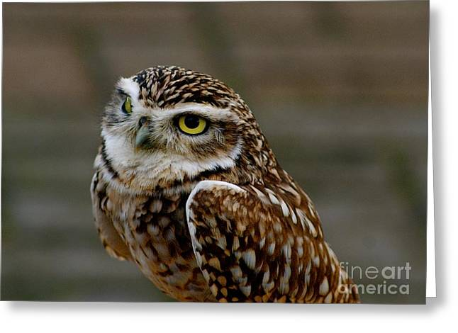 Greeting Card featuring the photograph Little Owl by Louise Fahy