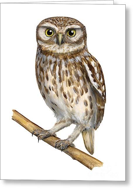Owl Of Minerva Greeting Cards - Little owl or Minervas owl Athene noctua - goddess of wisdom- Chouette cheveche- Nationalpark Eifel Greeting Card by Urft Valley Art
