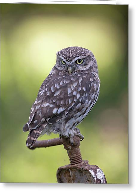 Little Owl Pipe Bender Greeting Card