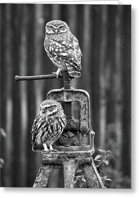 Little Owls Black And White Greeting Card