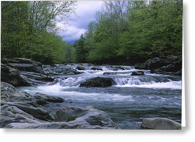 Eastern United States Greeting Cards - Little Pigeon River Greeting Card by Sandra Bronstein