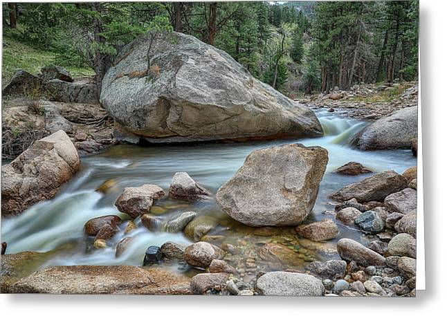 Greeting Card featuring the photograph Little Pine Tree Stream View by James BO Insogna
