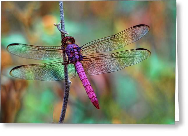 Little Pink Dragonfly  Greeting Card