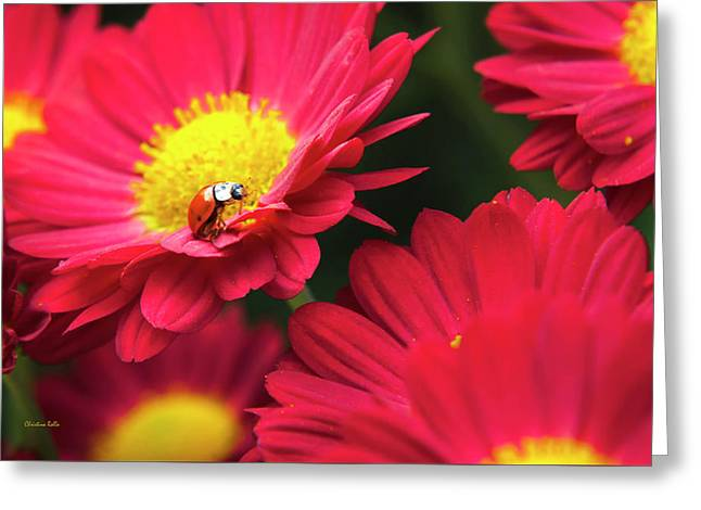 Little Red Ladybug Greeting Card by Christina Rollo
