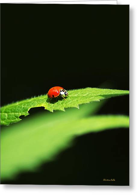 Little Red Ladybug On Green Leaf Greeting Card