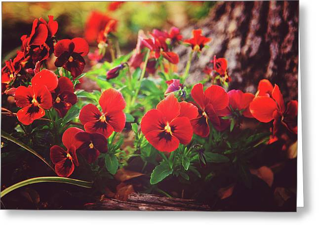 Little Red Pansies Greeting Card by Toni Hopper