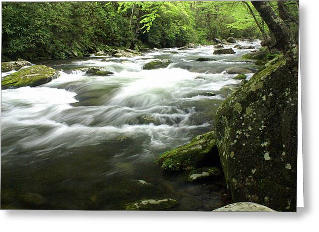 Little River 3 Greeting Card by Marty Koch