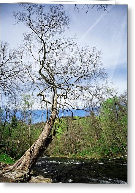 Greeting Card featuring the photograph Little River by Alan Raasch