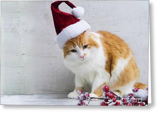 Little Santa Helper II Greeting Card