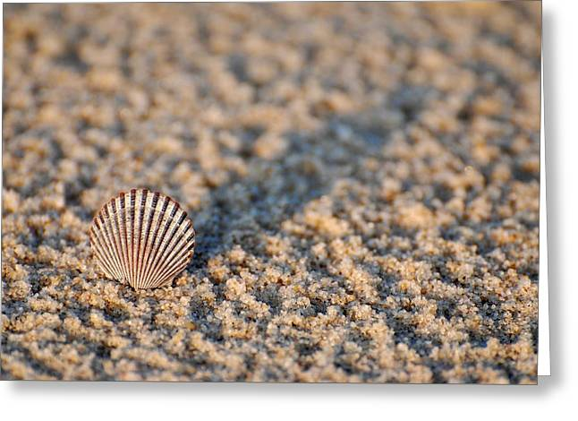 Little Seashell - Jersey Shore Greeting Card