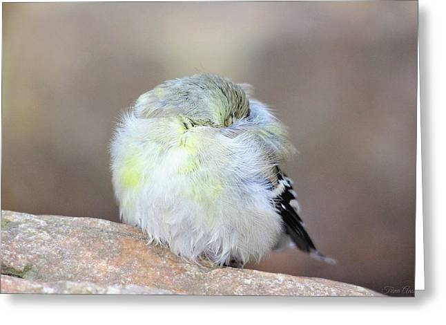 Little Sleeping Goldfinch Greeting Card