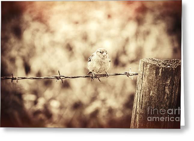 Little Sparrow Greeting Card by Amanda Elwell