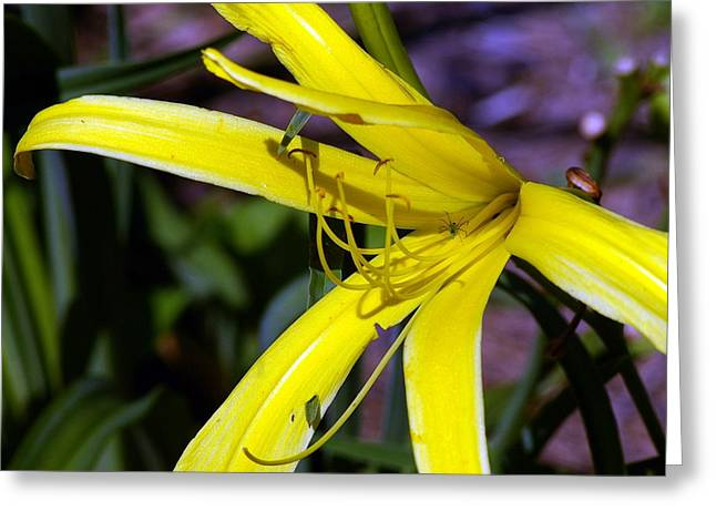 Little Spider Greeting Card by Don Prioleau