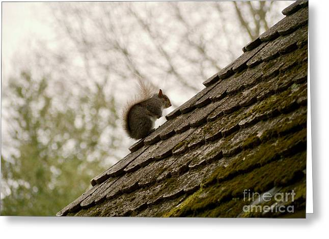Little Squirrel On A Rooftop Greeting Card