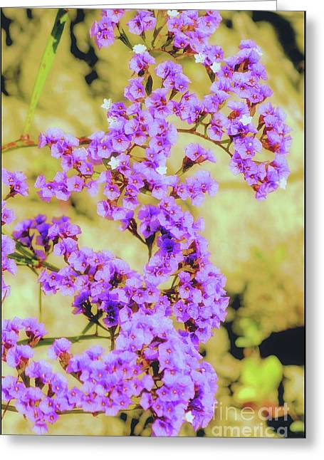 Little Statice Flowers Greeting Card by Luv Photography