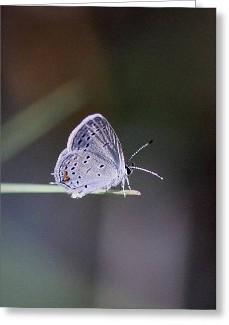 Little Teeny - Butterfly Greeting Card by Travis Truelove