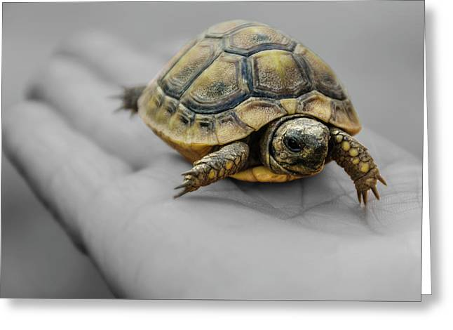 Little Turtle Baby Greeting Card