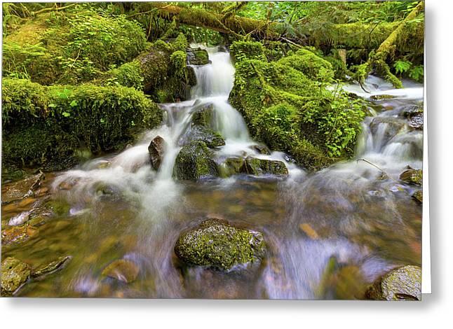 Little Waterfalls Along Wahkeena Creek Greeting Card