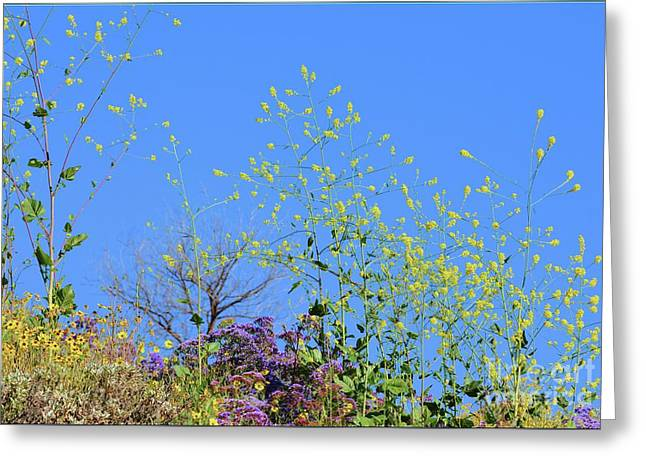 Little Flowers Greeting Card by Luv Photography