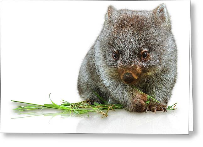Little Wombat Greeting Card
