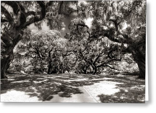 Live Oak Allee Infrared Greeting Card