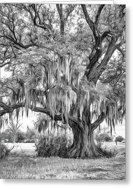 Live Oak And Spanish Moss - Paint Bw Greeting Card