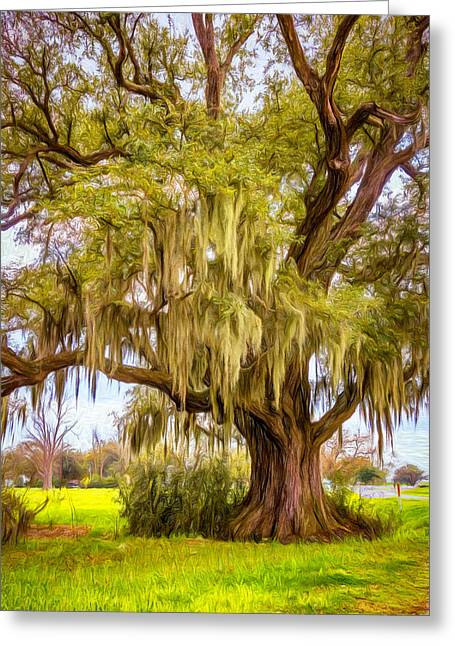 Live Oak And Spanish Moss - Paint Greeting Card