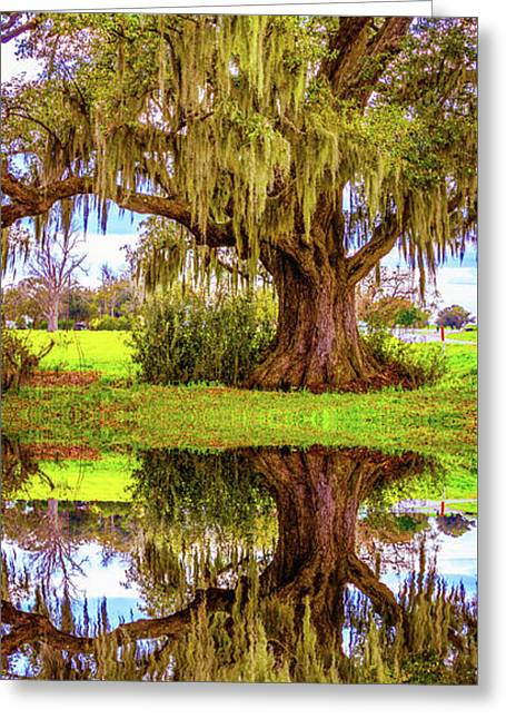 Live Oak And Spanish Moss - Reflection Greeting Card