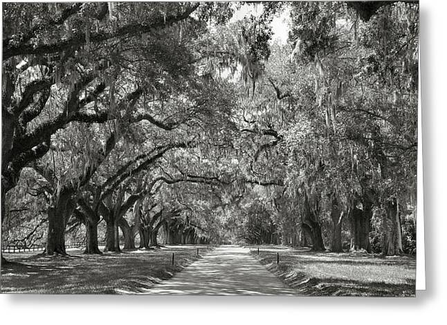Live Oak Avenue Greeting Card by Steven Ainsworth