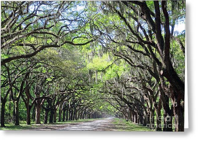 Greeting Card featuring the photograph Live Oak Canopy by Rick Locke