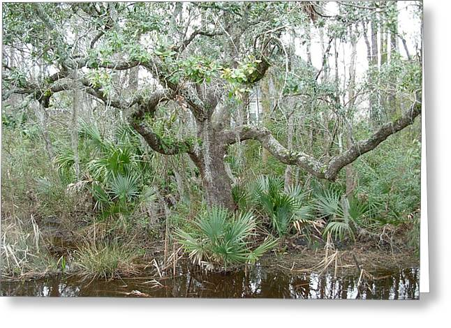 Greeting Card featuring the photograph Live Oak Dancing by Jeanne Kay Juhos