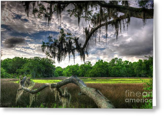 Live Oak Marsh View Greeting Card
